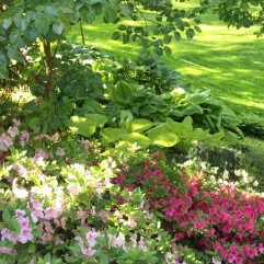 Hostas and Blooms