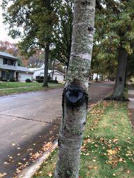 Tree Tar2 (1)